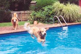 expert advice on swimming with dogs