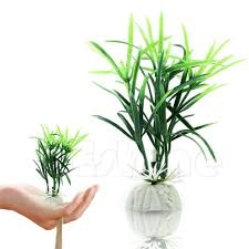 2017 ornamental plants fish tank short paragraph lucky bamboo