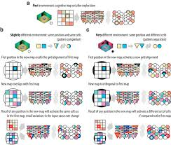 Cognitive Map Place And Grid Cells In A Loop Implications For Memory Function