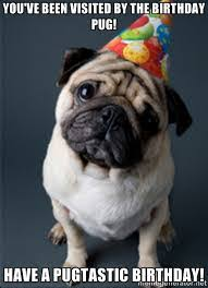 Happy Birthday Pug Meme - encrypted tbn0 gstatic com images q tbn