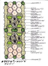 companion plant layout garden plans pinterest plants