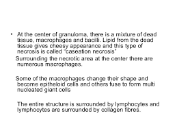 What Is Dead Tissue Called Review On Microbiology And Pathophysiology Of Tuberculosis