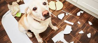 6 best pet friendly flooring options for your dogs cats floor