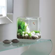 Aquarium For Home by Fish Tank Office Ideas Superb Fish Tank For My Reception Desk