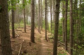 Caledon Forest Map Best Trails In Palgrave Forest And Wildlife Area Ontario
