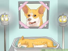 Can You Bury A Dog In Your Backyard 3 Ways To Have A Funeral For Your Dog Wikihow