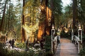 redwood forest wedding venue uplighting in wash of redwood forest trees at outdoor