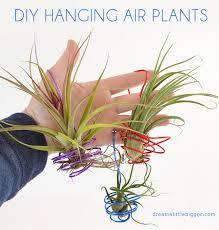 hanging air plant diy hanging air plants dream a little bigger