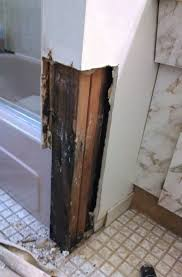 pictures of mold in the gallery and on bathroom walls images