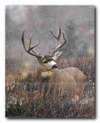Hunting Decorations For Home by Amazon Com Mule Deer Big Antler Rack Wildlife Hunting Wall Decor