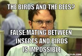 Exles Of Internet Memes - birds and the bees meme best bird 2018
