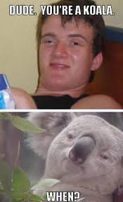High Koala Meme - dude you re a koala 10 guy know your meme