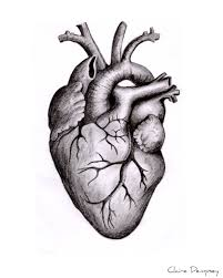 royalty free images anatomical heart vintage anatomical
