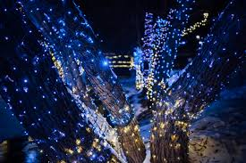 free images branch light night blue lighting decor