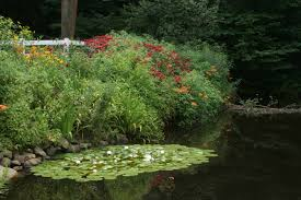 native water plants pond wallpapers high quality download free