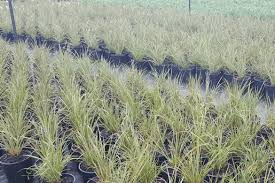 native plant nurseries perth plantrite