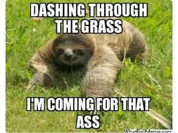 Best Sloth Memes - pin by haley jensen on laugh pinterest memes funny memes and
