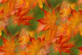 index of images backgrounds fall