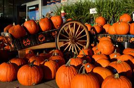 halloween pumpkin desktop backgrounds lessons tes teach