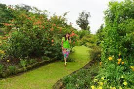 kebun mawar rose garden a place for goddess l1lysparrow