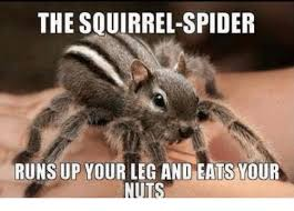 Squirrel Nuts Meme - the squirrel spider runs up your leg and eats your nuts meme on me me