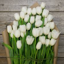 white tulips halo white tulip bouquet the bouqs co