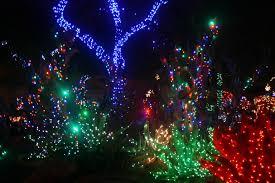 Botanical Gardens Christmas Lights by Ethel M Holiday Cactus Garden