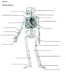 Cat Dissection Worksheet Human Anatomy Chart Page 85 Of 202 Pictures Of Human Anatomy Body