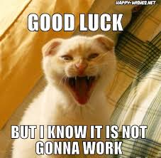 Good Luck Cat Meme - good luck memes wishing good luck happy wishes