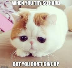 Sad Cat Meme - sad cat meme generator imgflip