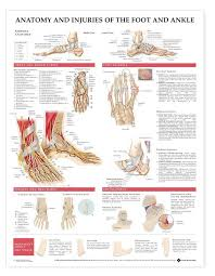 Foot Anatomy Nerves Anatomy Chart Foot And Ankle Anatomy And Injuries