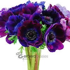 anemones flowers bulk flowers purple anemones