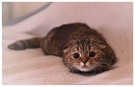 Scared Cat Meme - scared kitty rebrn com