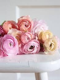 Ranunculus Flower Flowers From Amsterdam Romantic Ranunculus Wedding Bouquet