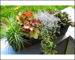 winterharte pflanzen balkon balkonpflanzen herbst winter pflanzenversand kaufen