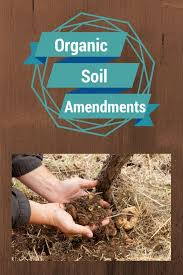 65 best soil health images on pinterest plants fungi and garden