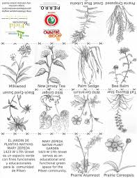 native plants of new jersey garden names of garden plants flowers names images about and