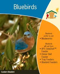 How To Attract Indigo Buntings To Your Backyard Wild Birds Unlimited How To Attract Bluebirds