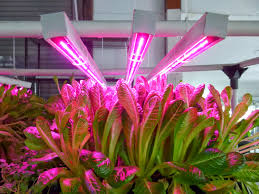 philips led grow light specialty greens produces better crops with grow lights hort