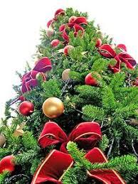 Božićna drvca Images?q=tbn:ANd9GcQ7OO3NWhAs6eRzI5qceZ2E_PvTxNfsYgSaUg9cw-xGky7gPd-4Gw