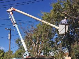 arbor tree surgery utility line clearance