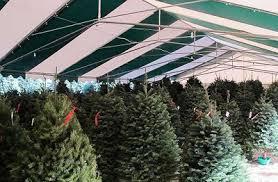 los angeles county california christmas tree farms choose and