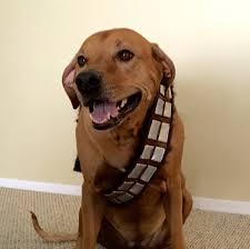 Wookie Halloween Costume Handmade Custom Star Wars Chewbacca Inspired Dog Bandolier