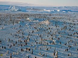 emperor penguins escape velocity photo gallery pictures more