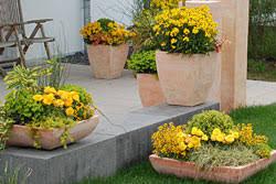balkon und terrassenpflanzen terrassenpflanzen flair auf balkon und terrasse egesa garten