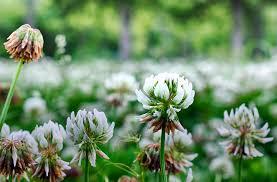 portland native plants master naturalists in portland u2014 portland parks foundation