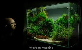 Aquarium Aquascaping Altitude U0027 Aquascape By James Findley The Green Machine