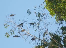 kumarakom bird sanctuary wikipedia