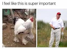 Chicken Memes - here s a basket full of chicken memes to help you deal with finding