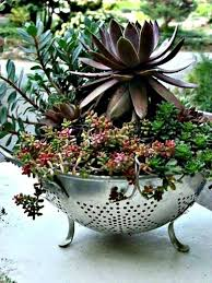 Ideas For Container Gardens - 953 best container gardening images on pinterest pots garden